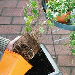 Composición de vivaces en jardinera 5