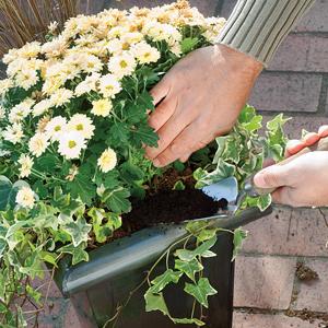 Composición de vivaces en jardinera 6