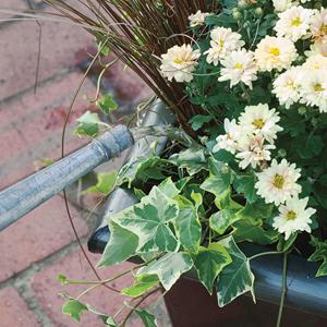 Composición de vivaces en jardinera 7