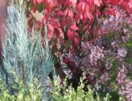 imagen El contraste de color en el jardín