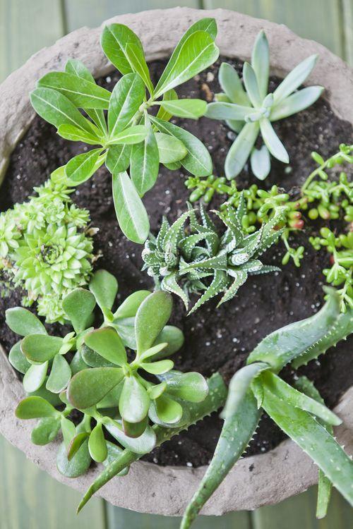 Jardín de suculentas en una maceta 5
