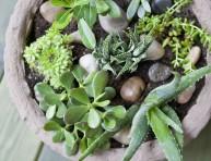 imagen Jardín de suculentas en una maceta