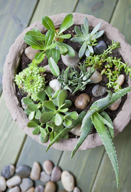 Jardín de suculentas en una maceta 6