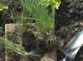 imagen La multiplicación de las plantas