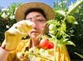 imagen Las enfermedades de las plantas