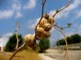 imagen Plagas: babosas, caracoles y su control