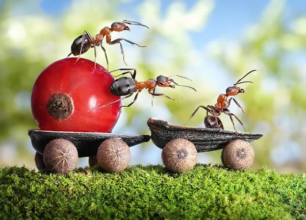 Plagas: hormigas y su control