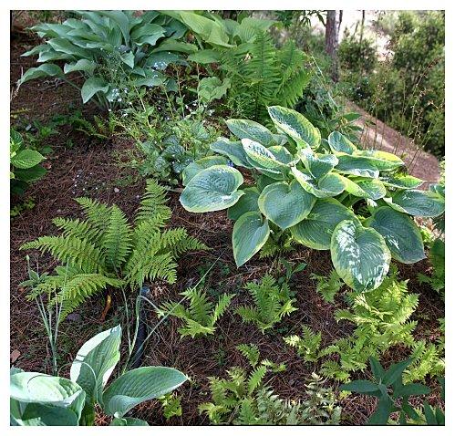 Helechos gu a de jardiner a part 2 - Plantas exterior mucho sol ...
