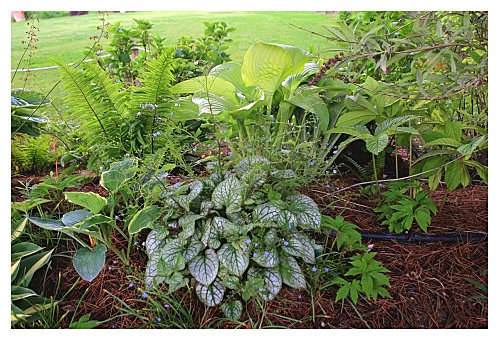 Plantas para macizos sombreados 3