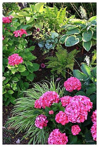 Plantas para macizos sombreados 4