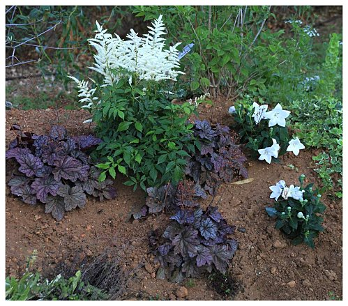 Plantas para macizos sombreados 5