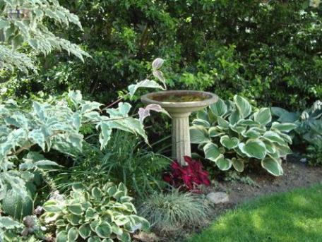 Plantas variegadas 2