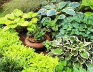 imagen Plantas variegadas
