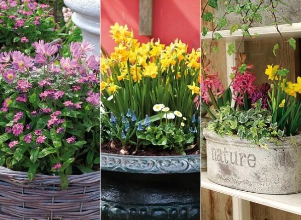 Las jardineras de primavera se preparan en otoño 1