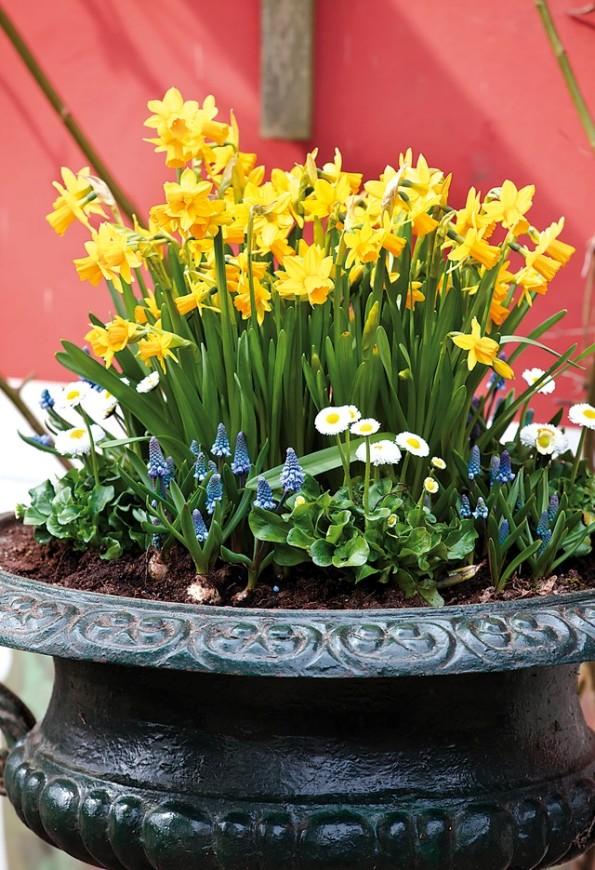 Las jardineras de primavera se preparan en otoño 3