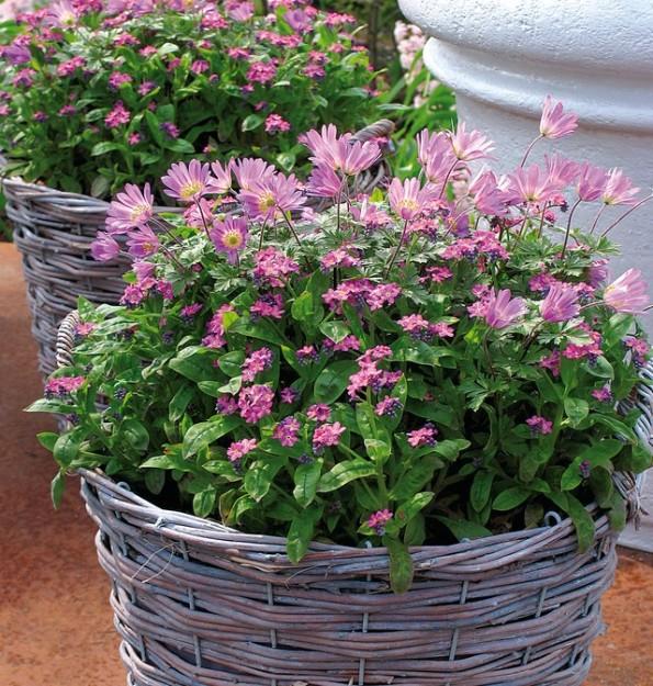 Las jardineras de primavera se preparan en otoño 5