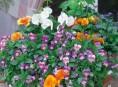 imagen Las jardineras de primavera se preparan en otoño
