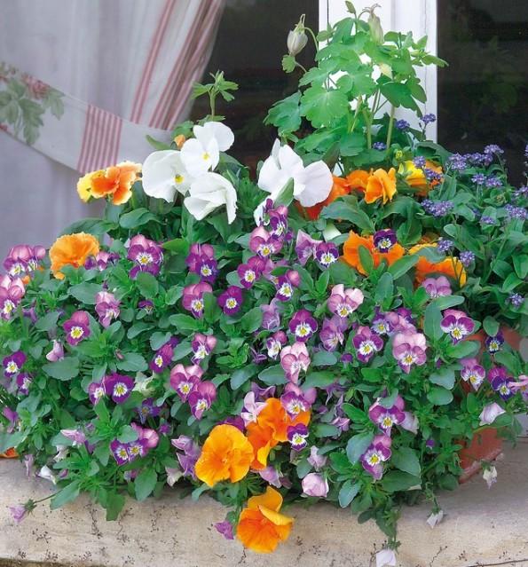 Las jardineras de primavera se preparan en otoño 6