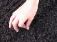 imagen Qué es la siembra de asiento