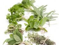 imagen Recolectar y conservar las hierbas aromáticas