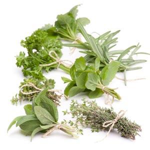 Recolectar y conservar las hierbas aromáticas 1