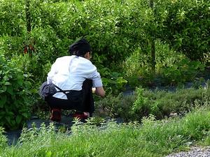 Recolectar y conservar las hierbas aromáticas 2