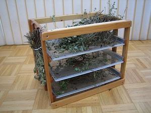 Recolectar y conservar las hierbas aromáticas 4