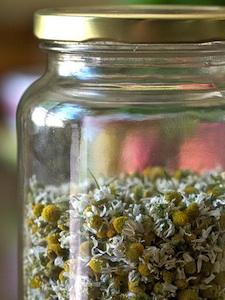 Recolectar y conservar las hierbas aromáticas 5