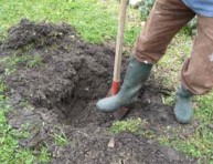 imagen Vamos a plantar antes de que llegue el frío