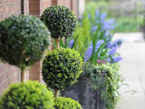 Arbustos perennes 3