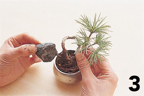 Cómo montar un keshiki bonsai4