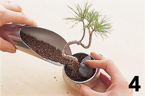 Cómo montar un keshiki bonsai5