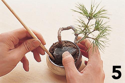 Cómo montar un keshiki bonsai6