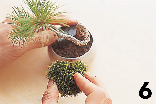 Cómo montar un keshiki bonsai7