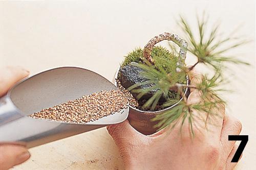 Cómo montar un keshiki bonsai8
