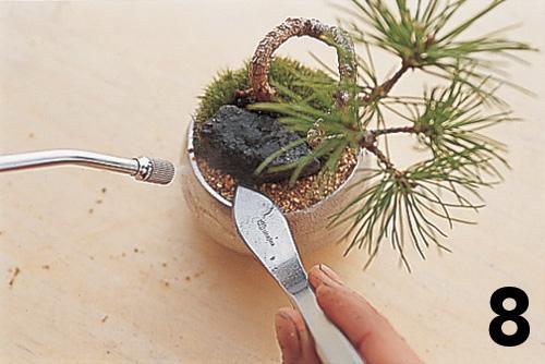 Cómo montar un keshiki bonsai9