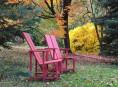 imagen Árboles con color de otoño