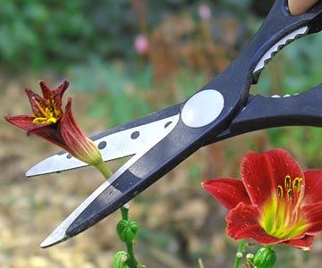herramientas de jardín 5