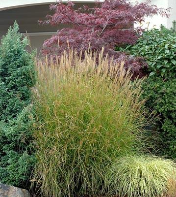 Cultivo y cuidados de las hierbas ornamentales 2