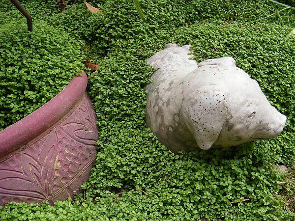 Plantas tapizantes 4