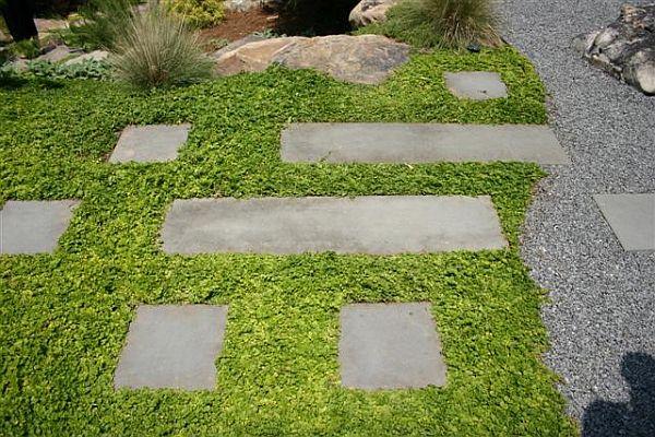 Plantas tapizantes 5