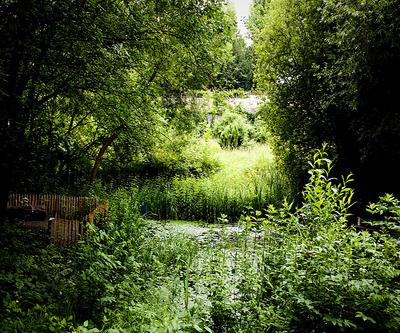 Jardines salvajes en París 1