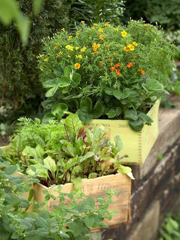 Macetas y jardineras divinas 4