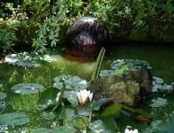 imagen Mantenimiento de los estanques de jardín