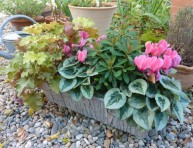imagen Mini-ciclamen para una jardinera chic