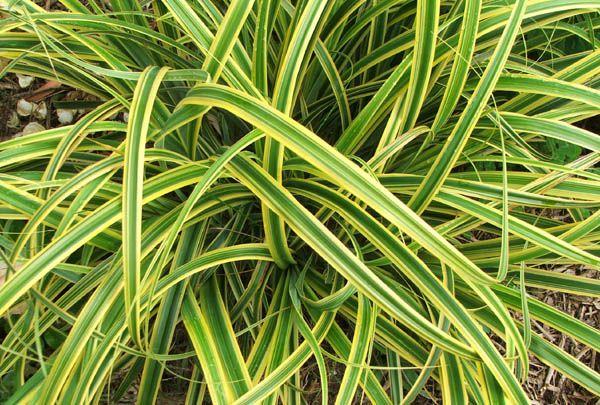 Plantas De Interior Resistentes - Plantas-exterior-resistentes