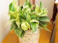 imagen Plantas de interior resistentes