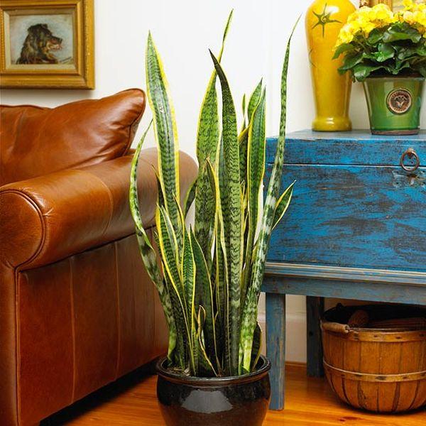 Plantas de interior resistentes - Plantas muy resistentes al sol ...