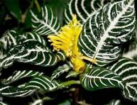 imagen Cuatro plantas exóticas de interior