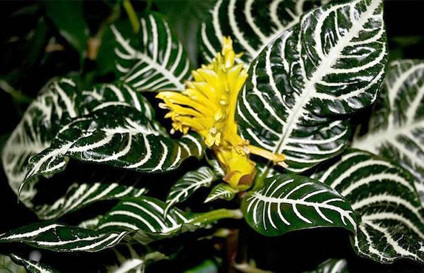 Plantas de interior exóticas 1